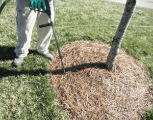 worker using deep root tool
