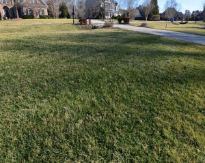 fescue with desiccation