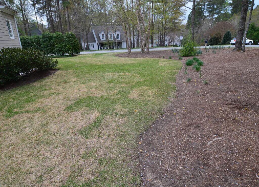 patchy zoysia grass