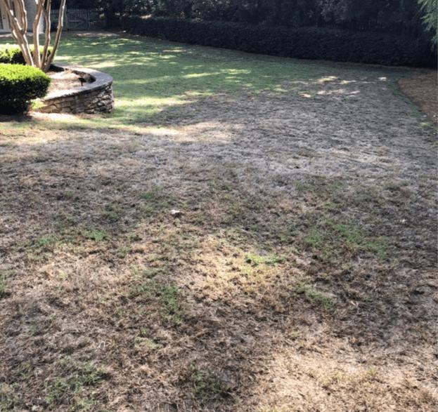 winter damage on bermuda grass