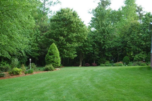 lawn with southern perfection grass